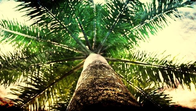 Palm wide angle final.jpg