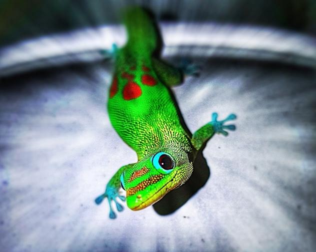 Lightning fast Gecko